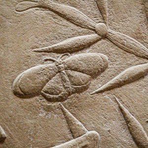 Décoration des tombeaux, papillon, Saqqarah