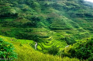 Philippine du Nord, riziere