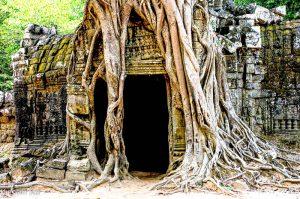 Temple Angkor, Ta Prom, Cambodge