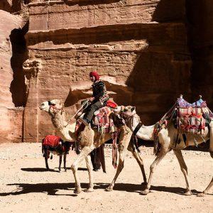 Chameaux de Petra, Jordanie