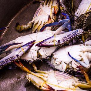 Crabe bleu, Kep, Cambodge